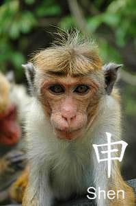 שנת הקוף