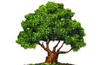 תוצאת תמונה עבור עץ ירוק